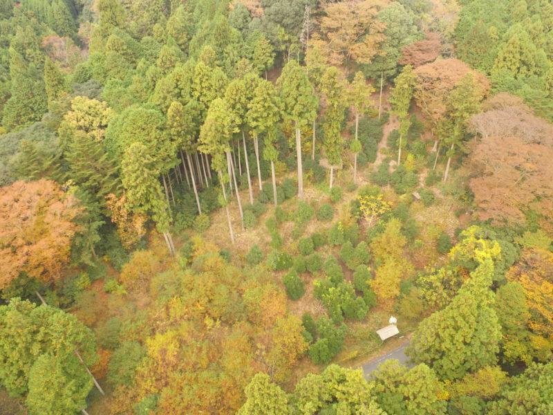 ツシマヤマネコと共生する地域森林管理行動計画