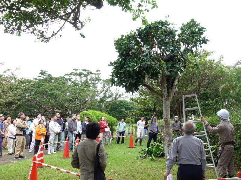 沖縄緑化樹木剪定調査