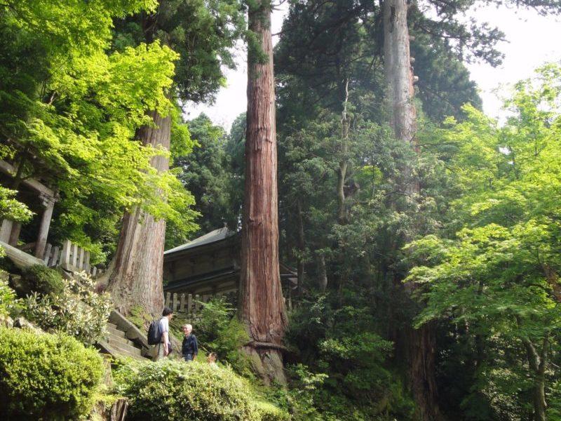 大本山永平寺伽藍周辺樹木(スギ巨木)維持管理計画