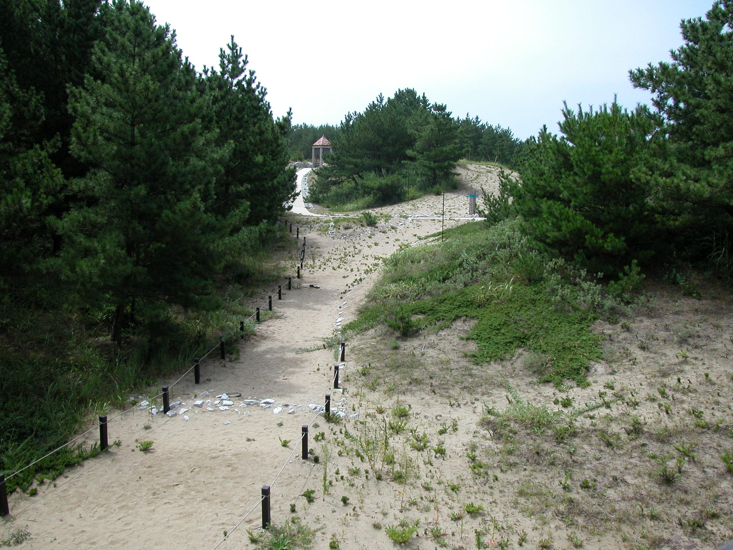 国営ひたち海浜公園 砂丘ガーデン実施設計・監理