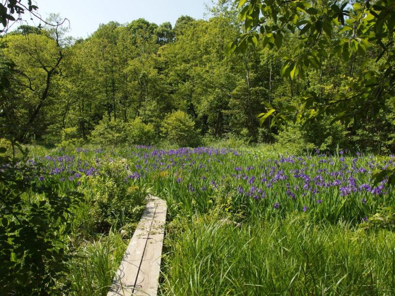 国指定天然記念物 三宝寺池沼沢植物群落保護・増殖・復元追跡調査および保全基本計画