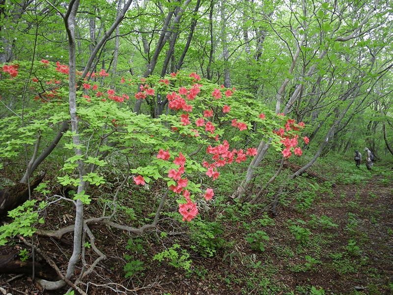 那須平成の森生物多様性モニタリング